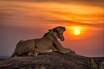 Ngorongoro Carter
