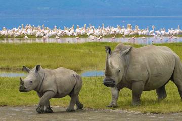 Safari to Lake Manyara Ngorongoro Crater Serengeti