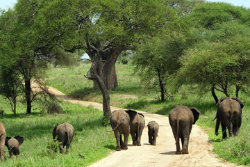 Tour Program Tarangire Ngorongoro Crater