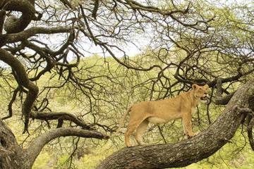 Safari to Moshi Lake Manyara Serengeti
