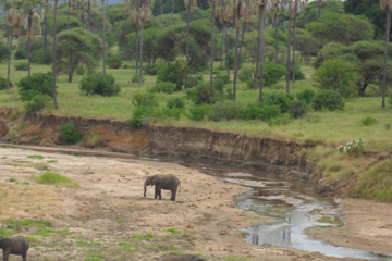 Tarangire Serengeti Ngorongoro Crater