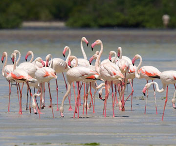 Lake Manyara Day Tour