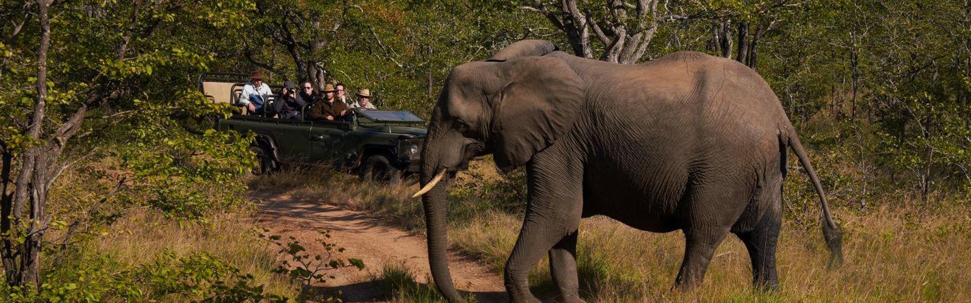 List of things to take on Safari