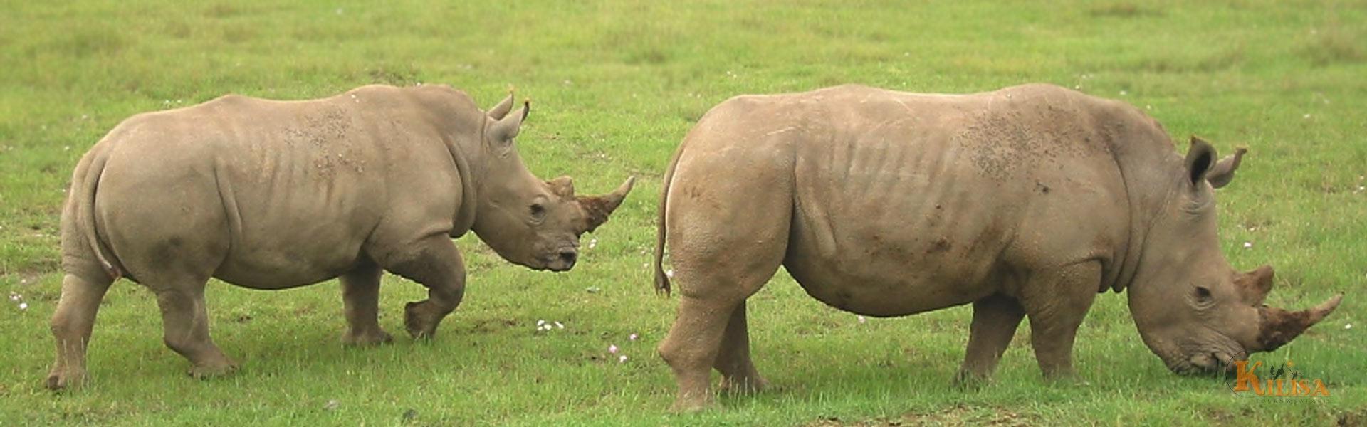 Ngorongoro Crater Day Tour