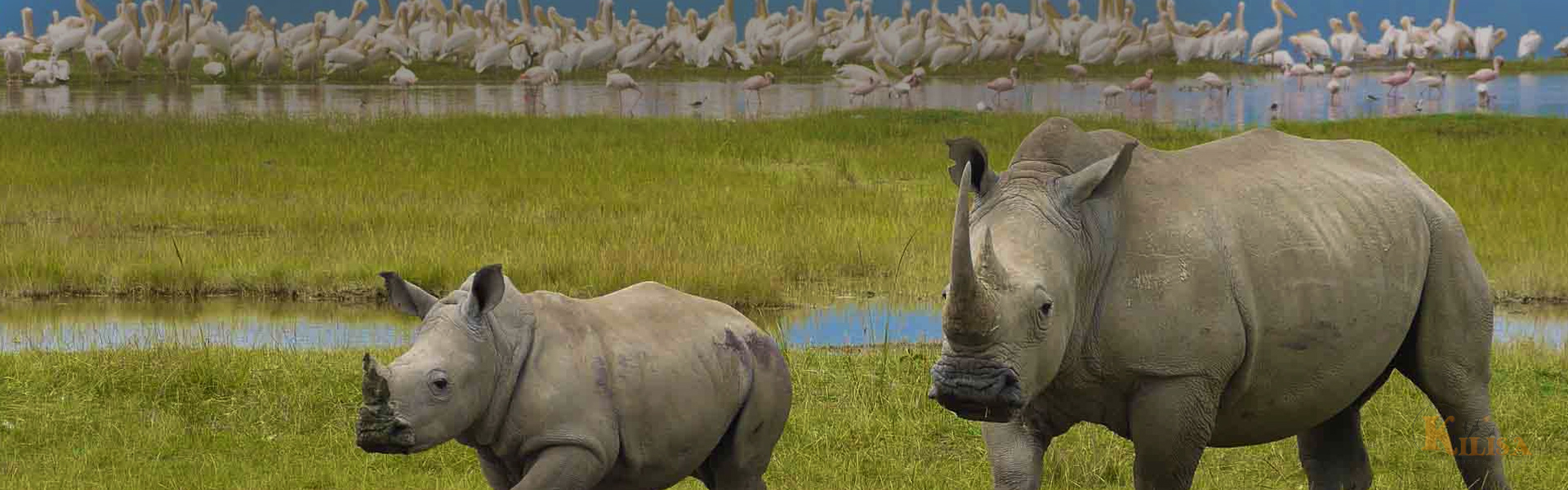 Tanzania Wildlife Safari (Moshi / Lake Manyara / Ngorongoro Crater / Serengeti)