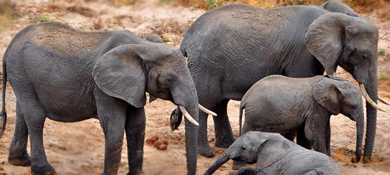Tanzania Wildlife Safari (Tarangire / Ngorongoro Crater)