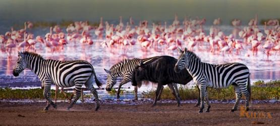 Tanzania Wildlife Safari (Lake Manyara / Ngorongoro Crater)