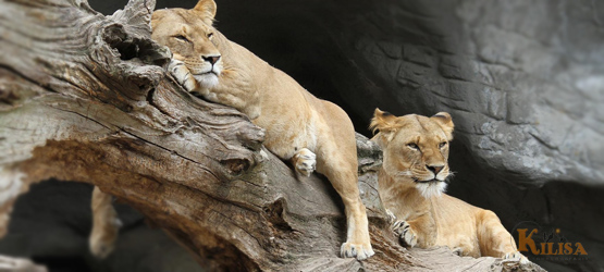 Tanzania Wildlife Safari (Lake Manyara / Ngorongoro Crater / Serengeti)
