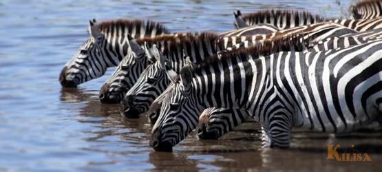 Tanzania Wildlife Safari (Tarangire / Serengeti / Ngorongoro Crater)