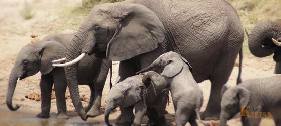 Tanzania Wildlife Safari (Lake Manyara / Tarangire / Serengeti / Ngorongoro Crater)