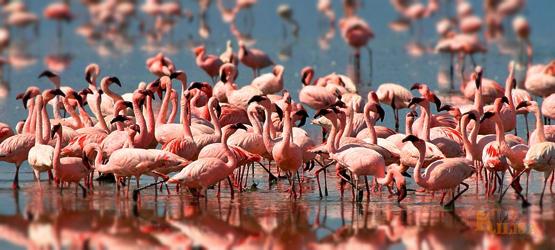 Tanzania Wildlife Safari (Moshi / Arusha / Lake Eyasi / Ngorongoro Crater / Serengeti / Natron)